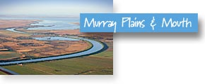 Murray Plains and Coorong